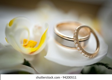 Wedding rings sitting on a white and yellow flower, very soft and beautiful