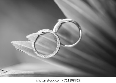 Wedding rings. Two Wedding rings for the bride and groom.