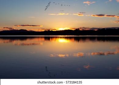 A wedge of geese flies over Fern Ridge Reservoir in the Willamette Valley of Oregon