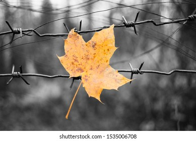 Wedge yellow sheet stuck on barbed wire fence