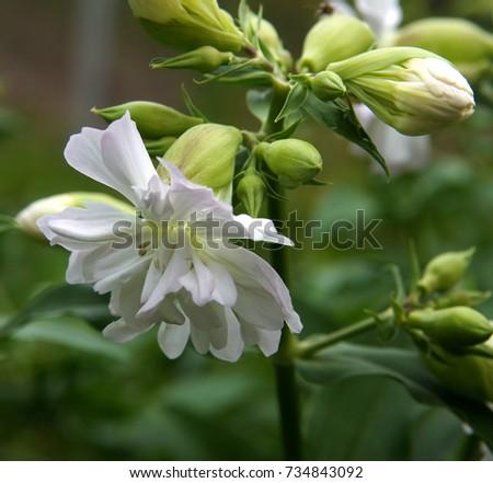 Weed beautiful fresh pale pink flowers stock photo edit now weed with beautiful fresh pale pink flowers mightylinksfo