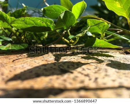 weed-bright-green-leafy-vine-450w-136689