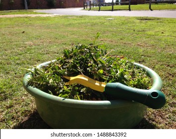 Weed control effort at private estate: Pile after weeding the lawn, yard or garden. Concept for weed removal, pulling weeds and home owners association rules. Mechanical and biological weed control.