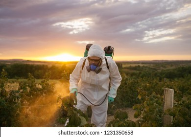 Weed control. Industrial agriculture theme. Man spraying toxic pesticides or insecticides on fruit growing plantation. Beautiful sunset in background.