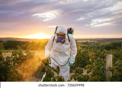 Weed control. Industrial agriculture theme. Man spraying toxic pesticides or insecticides on fruit growing plantation. Natural hard light on sunny day. Blue sky with clouds in background.