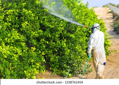 Weed control spray fumigation. Industrial chemical agriculture. Man spraying toxic pesticides, pesticide, insecticides on fruit lemon growing plantation, Spain, 2019. Man in mask fumigating.