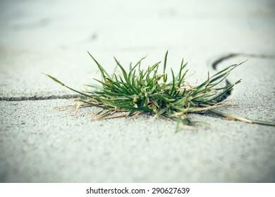 Weed on street