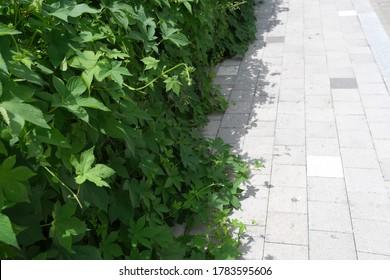 서울 거리에 피어오른 잡초