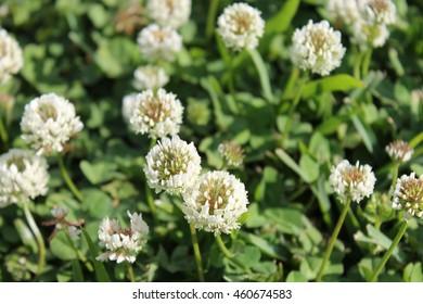 Weeds in field (flowering)