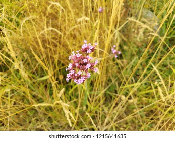 weeds and grasses and plant with pink flowers