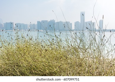Weeds growing at the sand beach with background of skylines of Abu Dhabi, UAE