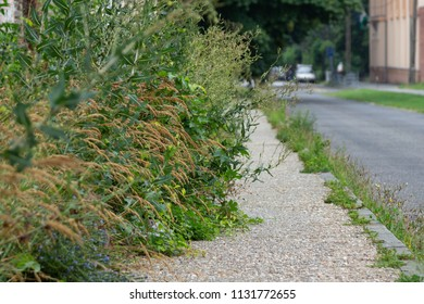 Weeds occupy the sidewalk