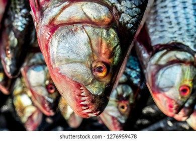 At the weekly 'Tuesday vegetable market' in Lusaka a school of Tiger Fish is waiting as the cathch of the day. These big fish caught my eye.