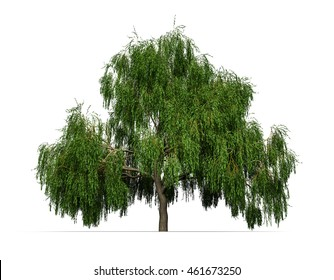 Weeping willow isolated on white background, 3D illustration