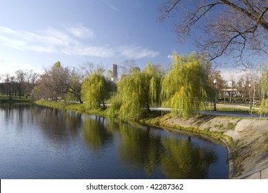 Weeping willow on the lake bank