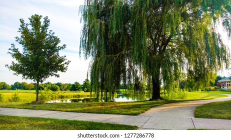 Weeping willow path during a summer's day