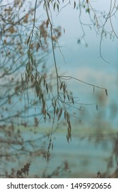 Weeping willow tree branch with green leaves, blue foggy rainy autumn background