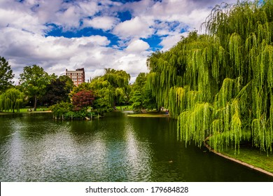 Weeping willow trees and a pond in the Boston Public Garden.