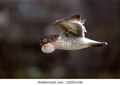 Weird blend of a frog and a seagull in flight