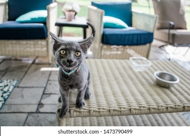 Weird Grey Cat who looks Evil and crazy and possessed