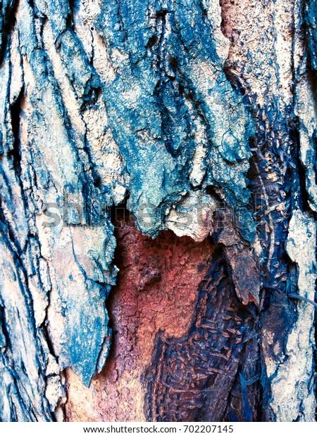 Weird old tree trunk texture close up