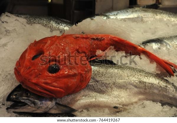 Weird Red Fish 5