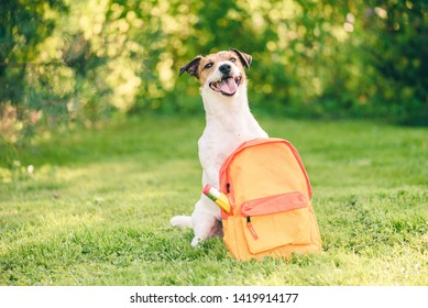 Welcome back to school concept with dog and backpack full of stationery
