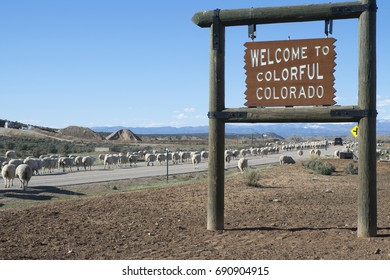 Welcome to Colorful aColorado! Sheep welcome too.