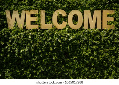 Welcome. Inscription ''welcome'' on a natural green background