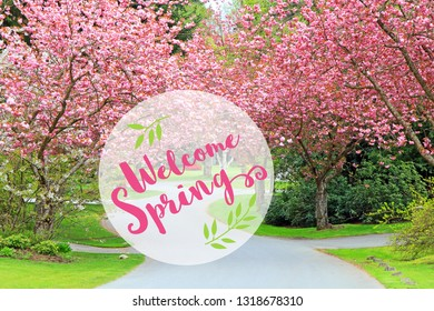 Welcome Spring message. Blooming pink cherry trees on a quiet rural neighborhood street. Cherry blossom flowers in full bloom. Springtime concept in Suburban Canada