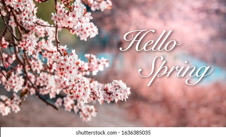 Welcoming spring - Hello spring message written in elegant font on a floral background with pink cherry blossoms.