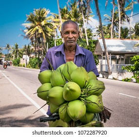 WELIGAMA SRI LANKA - JAN 6, 2017: Unidentified local man selling fresh coconuts on his bike on Jan 7, 2017. Sri Lanka.