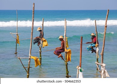 WELIGAMA, SRI LANKA - MARCH 18 2016: Fishermen sit on their stilts waiting for shoal of fish to catch them. This an old tradition practiced by around 500 fishing families in Galle.