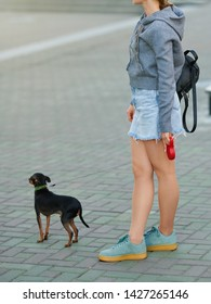 Well dressed girl with terrier on leash walking through the city street. Stylish girl in sneakers with backpack wearing denim skirt and pantyhose. Dog on flexi retractable leash. Woman with dog