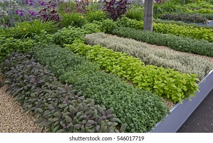 A well laid out Herb Garden