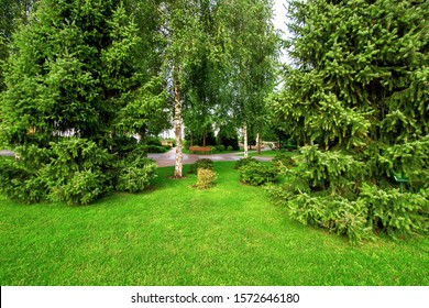 well maintained  garden with a green lawn and pine trees in the greenery park.