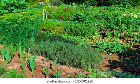 A well maintained vegetable and cut flower garden.