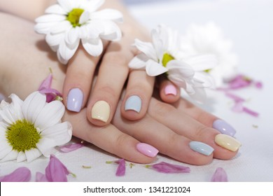 well-groomed, manicured fingers in pastel colors of the hand lie in the cut of petals and in the color of chrysanthemum