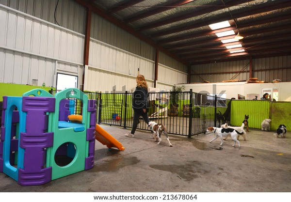 WELLINGTON - AUG 22 2014:Dog daycare.The popularity of such establishments in the world has grown greatly since the early 1990s, and arose out of the more traditional kennel industry.