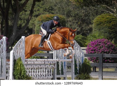 WELLINGTON, FLORIDA - January 16, 2019: Scott Stewart and Everwonder taking first place at WEF 2 Netjets USEF AA/CSI 2 in Wellington, Florida