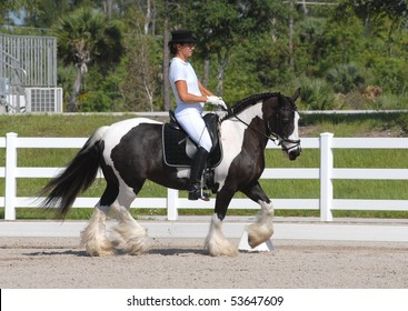 WELLINGTON, FLORIDA - MAY 22:  The first American born Gypsy Vanner, Kuchi, offspring of The Gypsy King,  ridden by Heather Caudill in the May dressage show on May 22, 2010 in Wellington