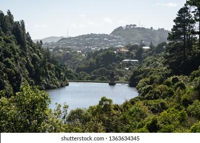 Wellington / New Zealand - March 28 2019: Zealandia nature reserve