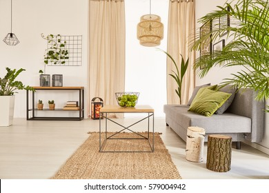 Well-lighted flat interior with plants and couch