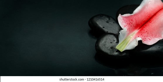 Wellness and spa luxury weekend design banner. Top view of spa stones and flower petal over black background texture. Massage salon and aromatherapy treatment concept.