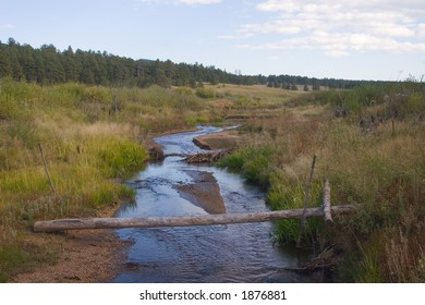 A well-placed log provides a crossing of a small stream in a mountain meadow