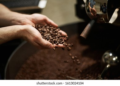 Well-roasted coffee beans in the hands of a master. Close-up.