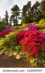 Well-tended garden with various flowers of various colors