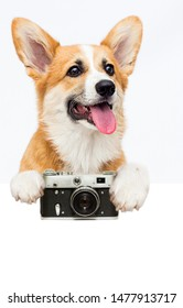 Welsh Corgi puppy photographer and camera peeps out