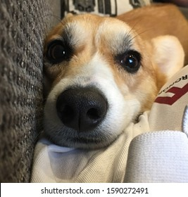 Smiel Images Stock Photos Vectors Shutterstock Soft matter, interfaces, and energy laboratory. https www shutterstock com image photo welsh dog smiel white pet 1590272491