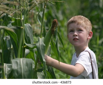 We're Not Alone.  A boy looking at the sky while picking corn.